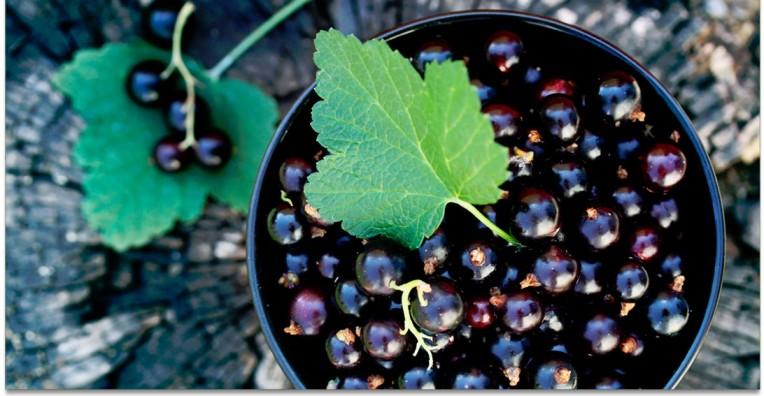 gelee de vino riesling con grosella negra
